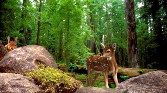 настройка на энергию Фауны