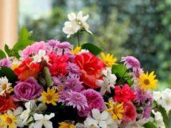 Цветы радость жизни