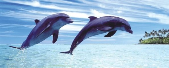 Наши Дельфины